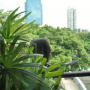 Ekamai, Bangkok, Thailand, 3 Bedrooms Bedrooms, ,4 BathroomsBathrooms,Condo,Sold,Baan Ananda,5238